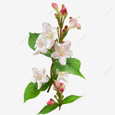 Nice Flower Png pngtree free download